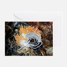 Nudibranch laying eggs Greeting Card