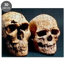 Neanderthal and Cro-Magnon 1 skulls Puzzle