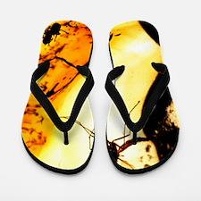 Mosquito in amber Flip Flops