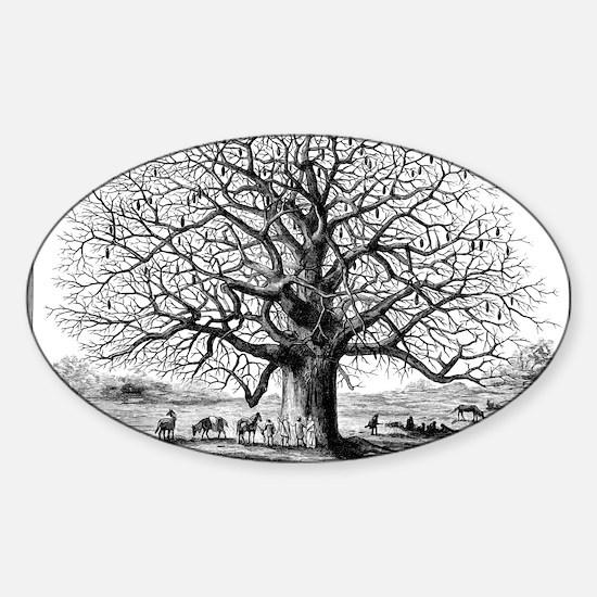 Monkeybread tree, 19th century Sticker (Oval)