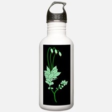 Moss anatomy, artwork Water Bottle