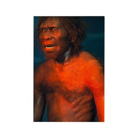 Model of a male Homo erectus man Rectangle Magnet