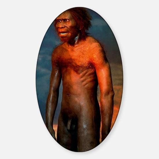 Model of a male Homo erectus man Sticker (Oval)