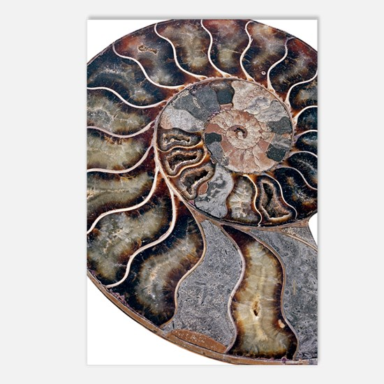 Ammonite Postcards (Package of 8)