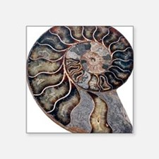 """Ammonite Square Sticker 3"""" x 3"""""""