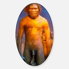 Models of Homo erectus men Decal