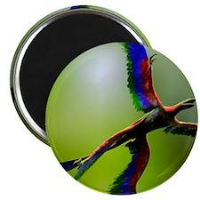 Microraptor dinosaur flying, artwork Magnet