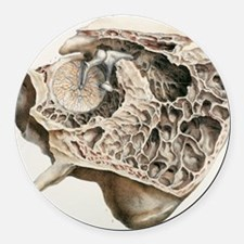 Middle ear anatomy, 1844 artwork Round Car Magnet