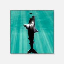 """Megalodon prehistoric shark Square Sticker 3"""" x 3"""""""