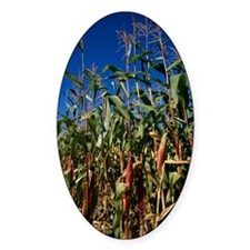 Maize crops Decal