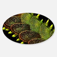 Marine worm fluorescing Sticker (Oval)