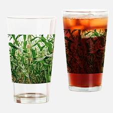 Maize crop Drinking Glass