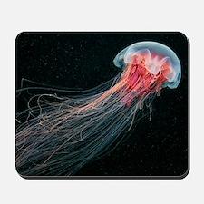 Lion's mane jellyfish Mousepad