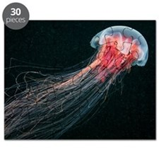 Lion's mane jellyfish Puzzle