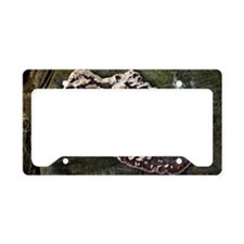 Lichen on a tree License Plate Holder