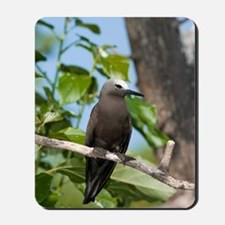 Lesser noddy in a tree Mousepad