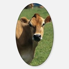Jersey cow Sticker (Oval)