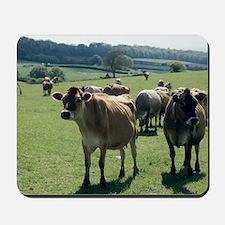 Jersey cows Mousepad