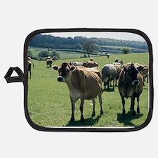 Jersey cows Potholder