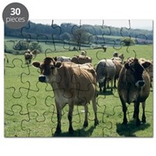Jersey cows Puzzle