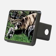 Jacob sheep Hitch Cover