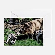 Jacob sheep Greeting Card