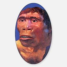 Java Man reconstruction Decal