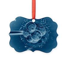 IVF embryo, light micrograph Ornament
