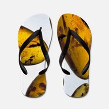 Insects in amber Flip Flops