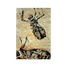 Insect nymph fossils Rectangle Magnet