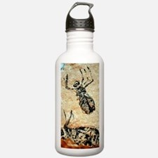 Insect nymph fossils Water Bottle