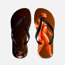 Illustration of the stages in human evo Flip Flops