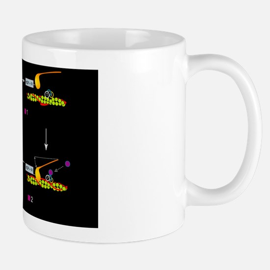 Muscle contraction, artwork Mug