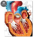 Human heart Puzzles