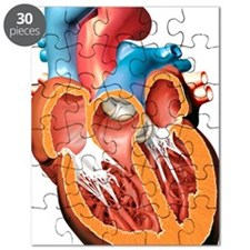 Human heart anatomy, artwork Puzzle