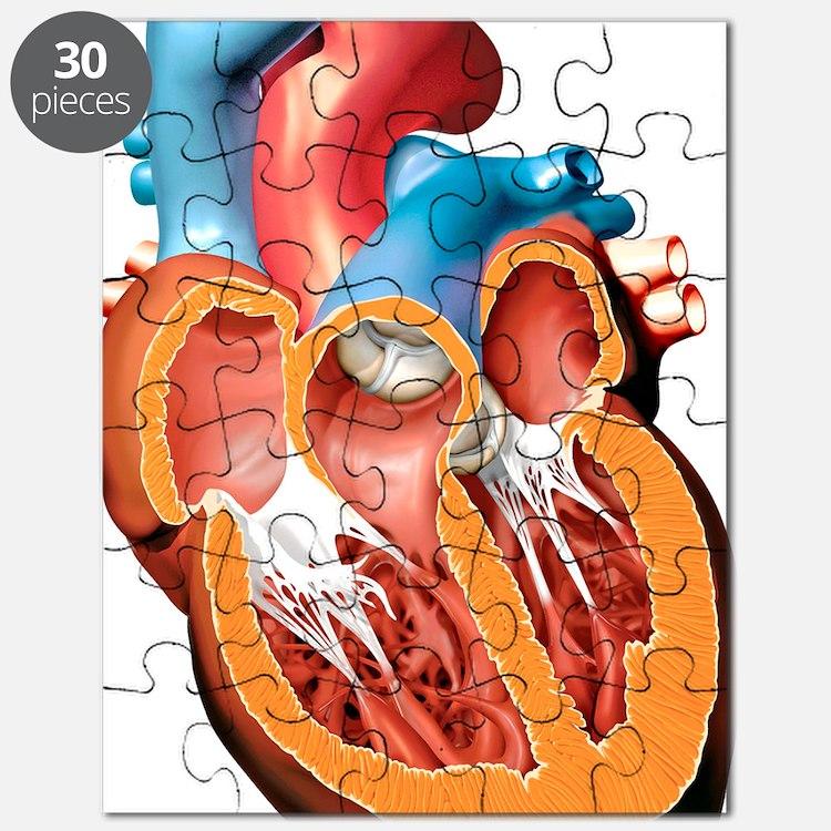 Human heart anatomy, artwork Puzzle