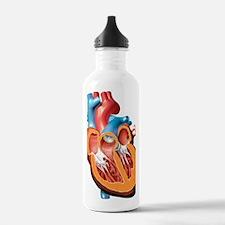 Human heart anatomy, a Water Bottle