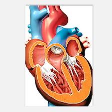 Human heart anatomy, artw Postcards (Package of 8)