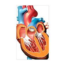 Human heart anatomy, artwork Decal