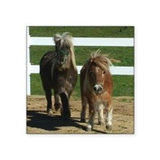 "Cute Miniature Horses Square Sticker 3"" x 3"""