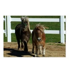 Cute Miniature Horses Postcards (Package of 8)