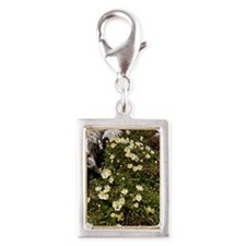 Mountain Avens (Dryas octope Silver Portrait Charm