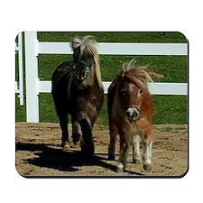 Cute Miniature Horses Mousepad