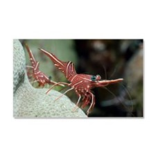 Hingebeak shrimp on a reef Car Magnet 20 x 12