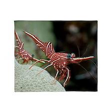 Hingebeak shrimp on a reef Throw Blanket