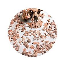 """Hominid fossil skull 1470 3.5"""" Button"""