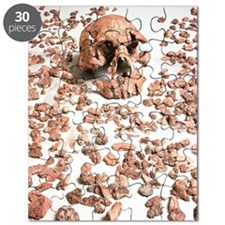 Hominid fossil skull 1470 Puzzle