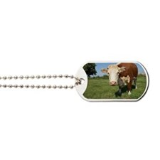Hereford cow Dog Tags