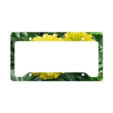Mexican Marigold (Tagetes ere License Plate Holder
