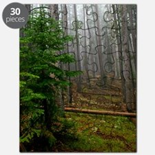 Pine forests 2 Puzzle
